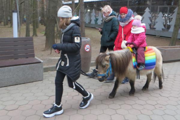 Катание на лошадях в парке
