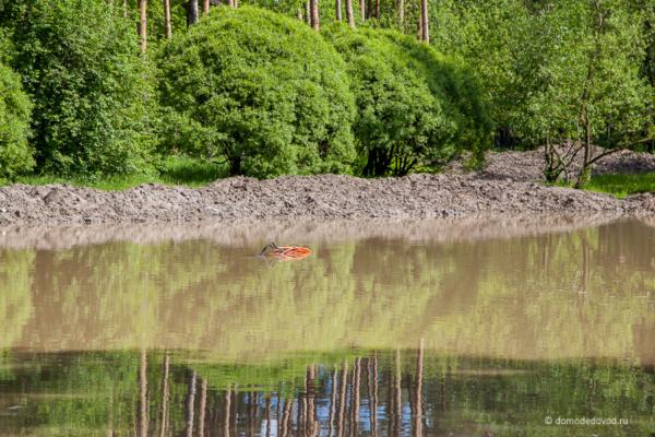 Утонувший экскаватор в парке «Ёлочки»