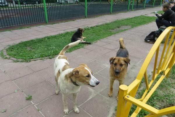 Бездомные собаки в Домодедово