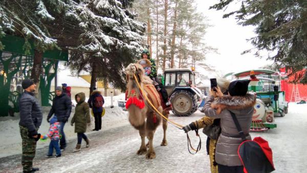 Верблюд в парке «Ёлочки»