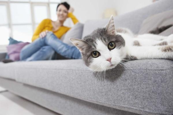 Как выбрать диван в квартиру с котом?
