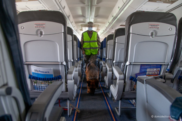 Осмотр самолета с собакой
