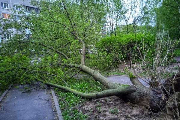 Ветер в Домодедово валит деревья