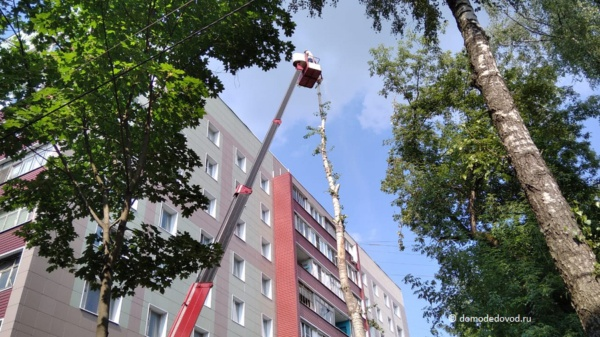 Обрезка деревьев в Домодедово