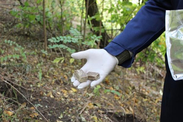 Брикетом по бешенству: раскладка вакцины в лесах округа