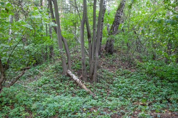 Курганы вятичей в Ушмарском лесу